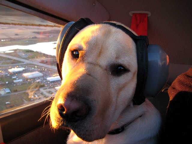 aviation headsets for dogs